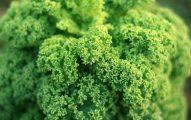Juicing Leafy Greens