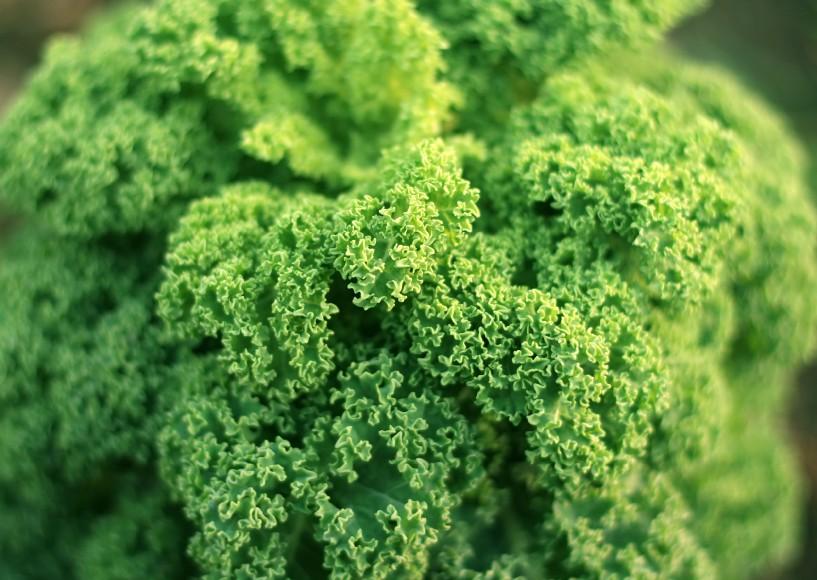 Best Masticating Juicer For Leafy Greens : 5 Best Juicers For Juicing Leafy Greens 2018 - JuicerLand.com